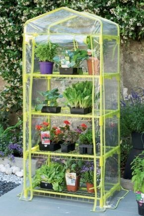 Mini-greenhouses: options and features of the device