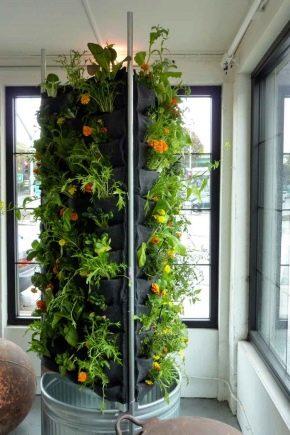 Jardin d'hiver dans l'appartement: conditions et caractéristiques de l'arrangement