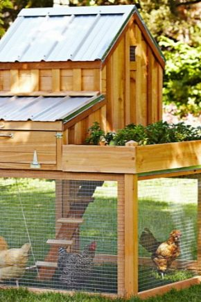 How to build a chicken coop for laying hens?