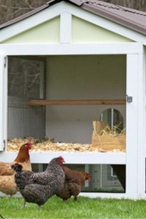 10 मुर्गियों के लिए एक शीतकालीन चिकन कॉप बनाने की विशेषताएं