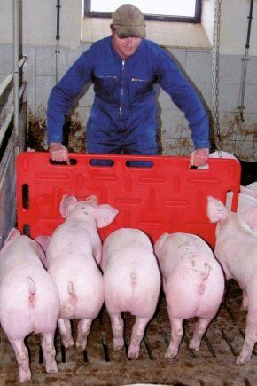 Projets porcherie: que sont-ils, comment construire et aménager à l'intérieur?