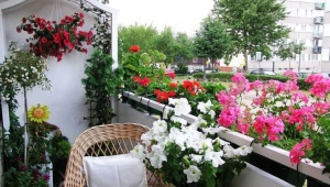Flowers on the balcony: names, tips on location