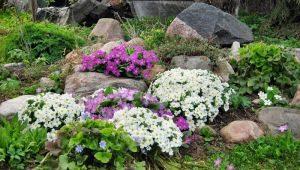 अल्पाइन स्लाइड्स के लिए पौधे: प्रकार और उनके नाम