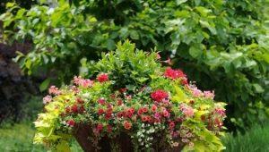 फूलों के बिस्तरों के लिए फूल: क्या चुनना है और देखभाल कैसे करें?