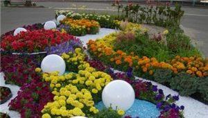 अपने बिस्तरों के साथ फूलों के फूलों और फूलों के फूलों के फूलों के डिजाइन की विशेषताएं