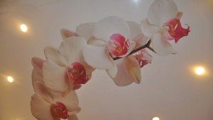 Plafond tendu avec orchidée: décor original à l'intérieur