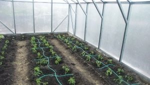 Drip irrigation in the greenhouse: the device and the advantages of the system