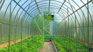 Polycarbonate greenhouses: pros and cons