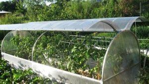 Types et caractéristiques des serres à toit ouvrant