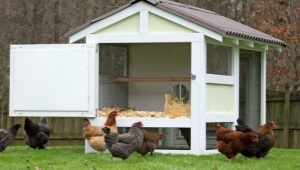 Features of building a winter chicken coop for 10 chickens