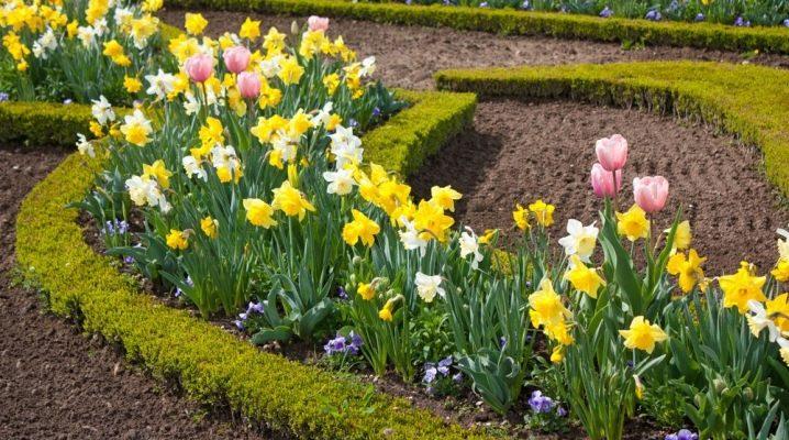 Växter av vårblomma trädgårdar: typer och namn