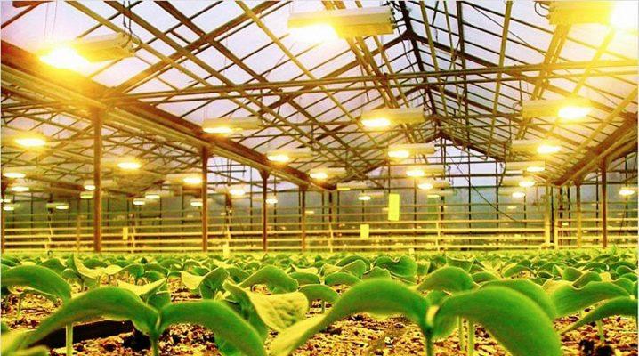 Lampor för växthus: vad ska man välja?