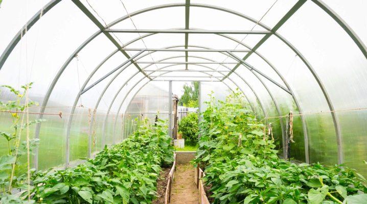 Arrangemang av växthus inuti: planering tricks