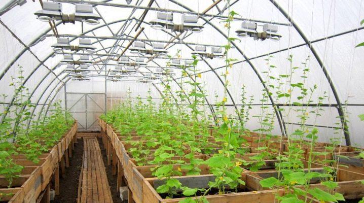 Växthus för odling av grönsaker året runt: alternativ för arrangemang