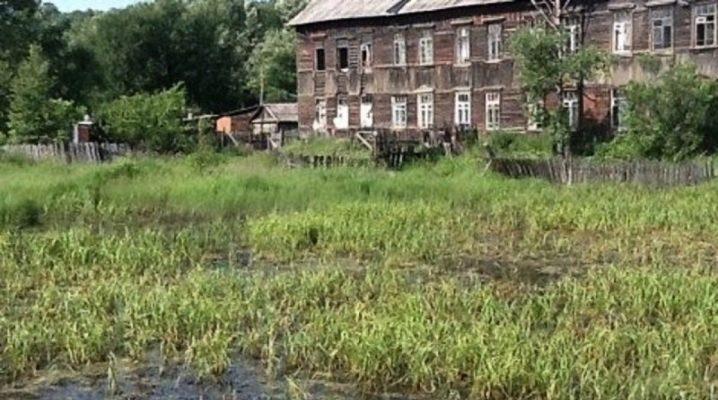 Características da seleção e criação da fundação no pântano