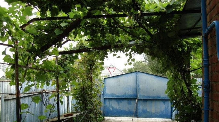 How to make a canopy for grapes?