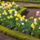 Plants of spring flower gardens: types and names