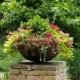 Blommor för blomsterbäddar: vad ska man välja och hur man bryr sig?