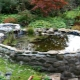 How to make a pond in the country with their own hands?