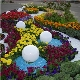 Features of the design of flower beds and flowerbeds of continuous flowering with their own hands