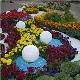 Caracteristici de design de paturi de flori și flori de flori de înflorire continuă cu mâinile lor