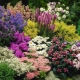 We select plants for autumn flower beds