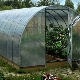 Features of the manufacture of greenhouses from the profile pipe