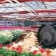 Heating for the winter polycarbonate greenhouse