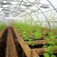 Greenhouses for growing vegetables all year round: options for arrangement