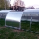 Greenhouses Tulip: models with opening sides and a sliding roof