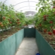 Warm beds in the greenhouse: step by step production