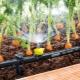 Subtiliteter av enheten för autowatering i växthuset