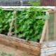 Hur man gör ett växthus i landet?