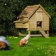Chicken coops: blueprints, construction and landscaping tips