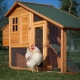 Features and tips for setting up a chicken coop