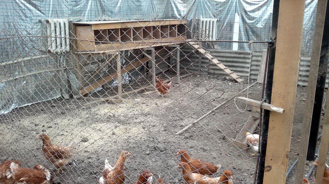 حظيرة دجاج على 10 دجاجات بأيديهم 53 صورة كيفية بناء مبنى لـ10 رؤوس في رسم تخطيطي خطوة بخطوة تصميم حقل صغير داخل
